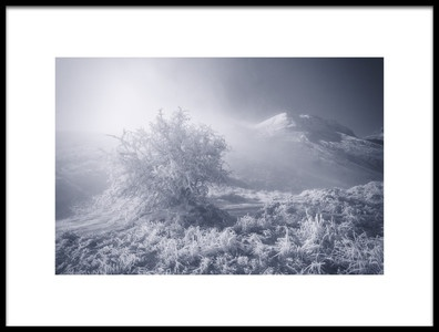 Art print titled The Lonely Tree by the artist Chris Kaddas