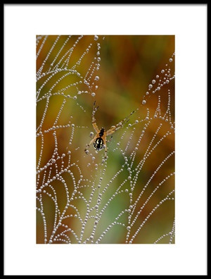 Buy this art print titled The Pearls of the Spider by the artist Luigi Chiriaco