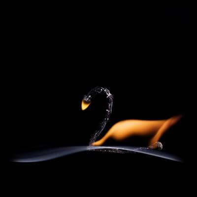 Buy this art print titled The Swan by the artist Stanislav Aristov