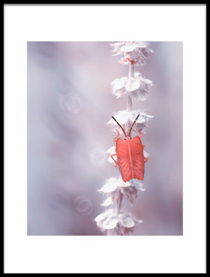 Art print titled The Tenderness of the Skeleton Bug by the artist Fauzan Maududdin