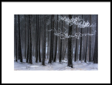 Art print titled The Trees Has Horns by the artist Dragan Lapcevic