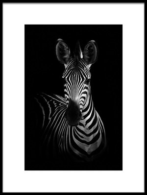 Buy this art print titled The Zebra by the artist WildPhotoArt