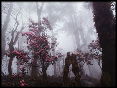 Art print titled Through the Fog by the artist Dmitry Kupratsevich