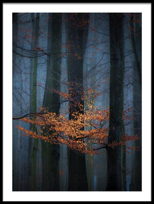 Buy this art print titled Touch of Winter Sun by the artist Marek Boguszak