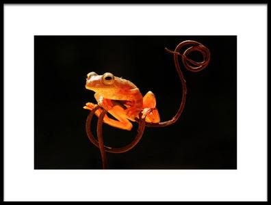 Art print titled Tree Frog by the artist Abdul Gapur Dayak