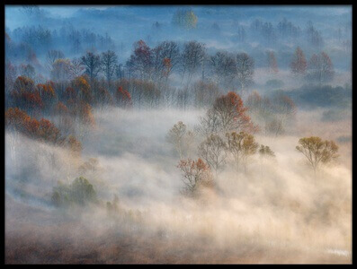 Art print titled Trees In the Early Morning Fog by the artist Valentino Alessandro