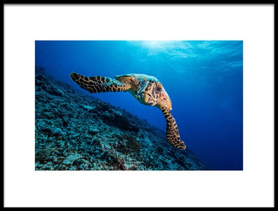 Art print titled Turtle by the artist Thomas Marti