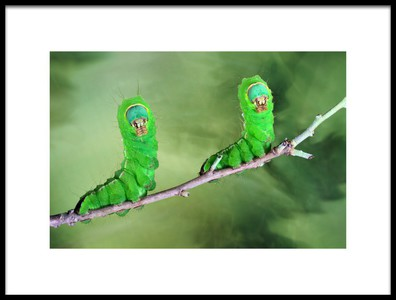 Art print titled Twin by the artist Jimmy Hoffman