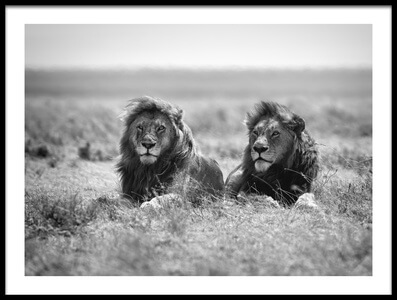 Buy this art print titled Two Kings by the artist Nicolás Merino