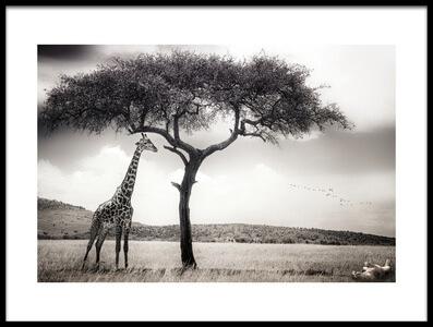 Art print titled Under the African Sun by the artist Piet Flour