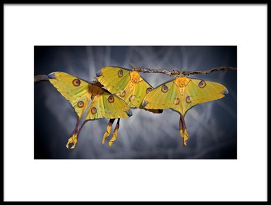 Art print titled Untitled No. 2306 by the artist Jimmy Hoffman