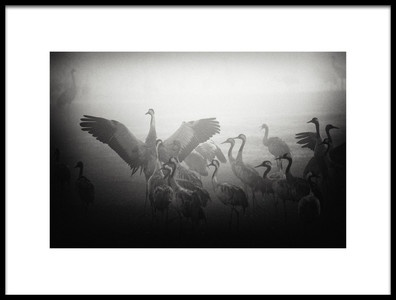 Art print titled Untitled No. 2677 by the artist Miki Meir Levi