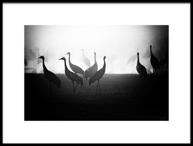 Art print titled Untitled No. 823 by the artist Miki Meir Levi