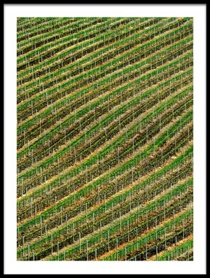 Buy this art print titled Vineyard by the artist Izidor Gasperlin