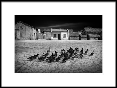 Art print titled Walking Goose by the artist Marc Apers