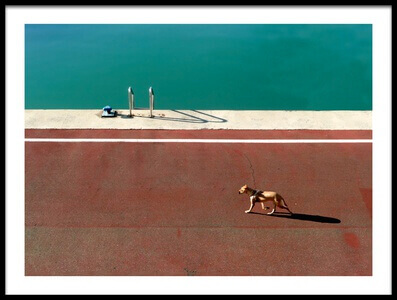 Art print titled Walking the Dog by the artist paolo luxardo