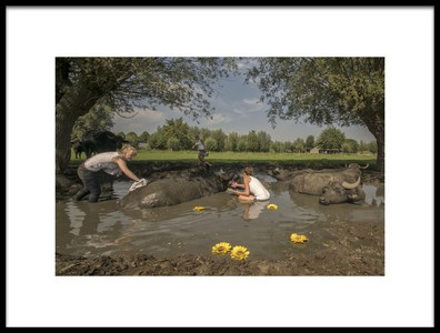 Art print titled Water Buffalo Beauty Centre by the artist Gert van den Bosch