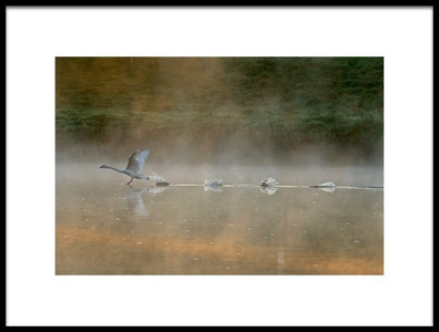 Buy this art print titled Water Runner by the artist Elisabeth Wehrmann