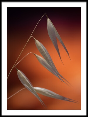 Art print titled Weeds In Sunset by the artist Thierry Lagandré (Transgressed Light)