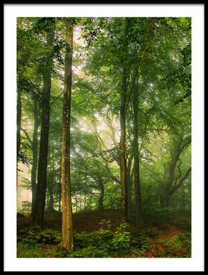 Buy this art print titled Welcome In the Forest by the artist Leif Løndal