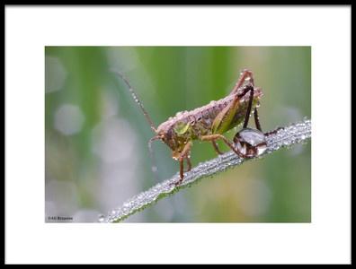Art print titled Wet Grasshopper by the artist Ali Rezaeian