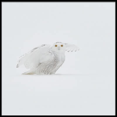 Buy this art print titled White Ghost by the artist Jim Luo
