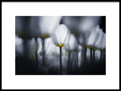 Art print titled White In White by the artist Takashi Suzuki