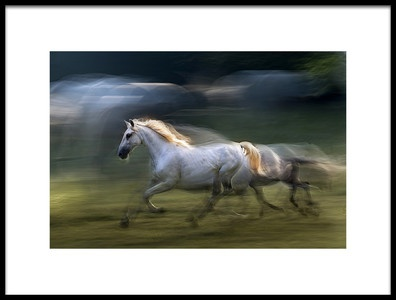 Art print titled White Mare Into a Gallop by the artist milan malovrh