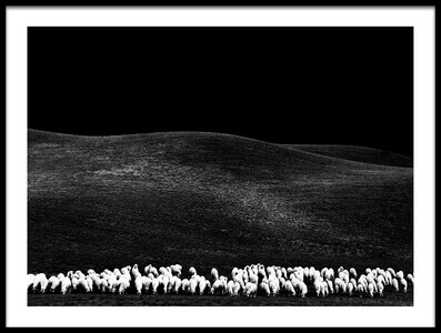 Buy this art print titled White Sheep by the artist franco maffei