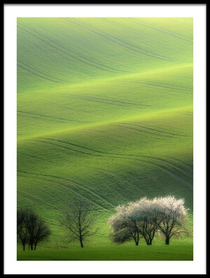 Art print titled White Trio by the artist Marek Boguszak