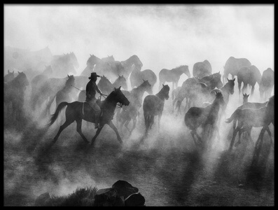 Buy this art print titled Wild Horses by the artist mehmet bedir