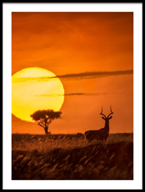 Buy this art print titled Wild Sunrise II by the artist Lucie Bressy