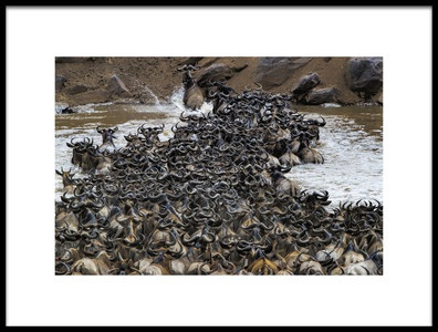 Art print titled Wildebeests Crossing River by the artist Jun Zuo