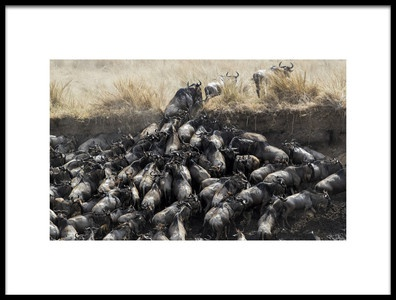 Art print titled Wildebeests In Crossing by the artist Jun Zuo
