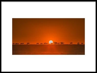 Art print titled Wildebeests Walking In Golden Light by the artist David Hua