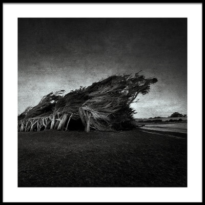 Buy this art print titled Wind Blown by the artist Graeme
