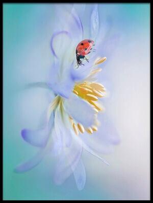 Art print titled Windflower Lady by the artist Jacky Parker