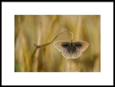 Buy this art print titled Wings of Grass by the artist Luigi Chiriaco
