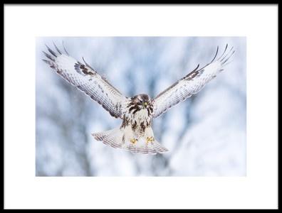 Buy this art print titled Wings Up by the artist Valmar Valdmann