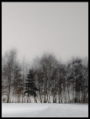 Art print titled Winter Forest by the artist Gilbert Claes
