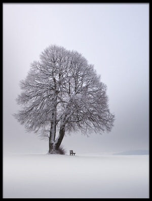 Buy this art print titled Winter Light by the artist Nicolas Schumacher