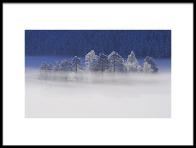 Art print titled Winter Light by the artist Norbert Maier