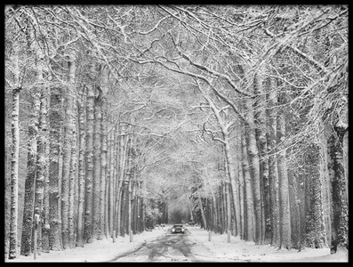 Buy this art print titled Winter Mood by the artist Saskia Dingemans