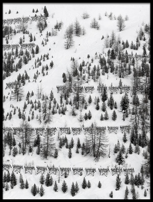 Art print titled Winter Trees by the artist Uschi Hermann