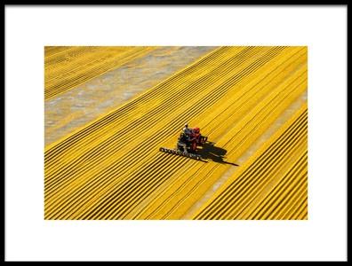Art print titled Yellow Crack Wheat by the artist mehmet bedir
