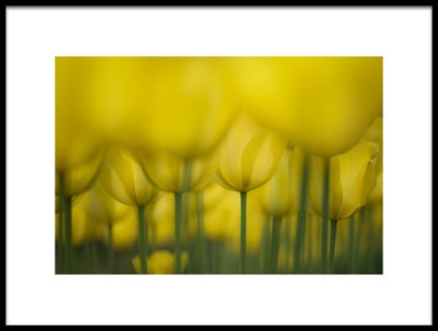 Art print titled Yellow One Color by the artist Takashi Suzuki