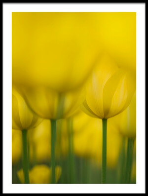 Buy this art print titled Yellow One Color by the artist Takashi Suzuki