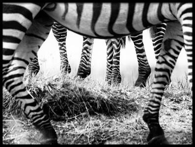 Art print titled Zebra Feet by the artist Mohammed Alnaser