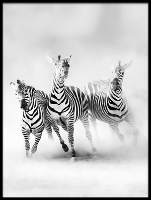 Art print titled Zebras by the artist Juan Luis Duran