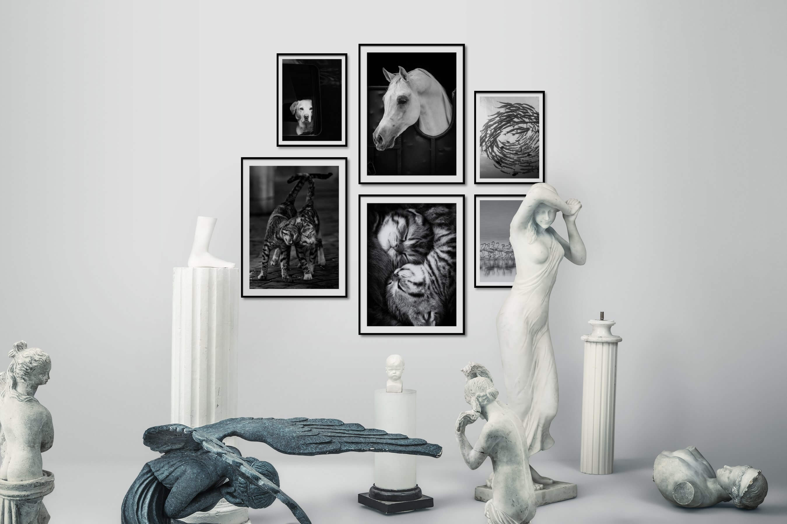 Gallery wall idea with six framed pictures arranged on a wall depicting Black & White and Animals